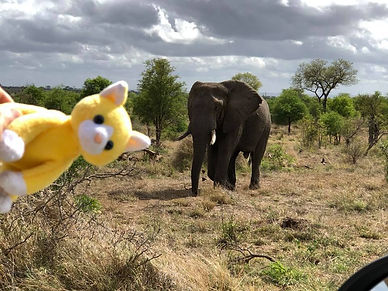 Peluche élephant Afrique du Sud