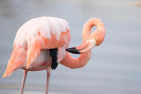 flamingo 4EDIT.jpg
