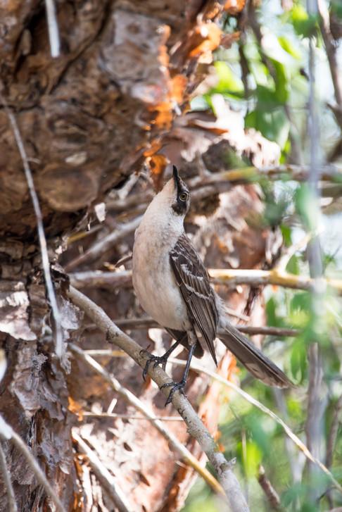 mockingbird 4.jpg