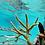 bouturage de coraux, sauvegarder les coraux, www.mooreacoralgardeners.com