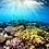 bouturage de coraux, sauvegarder les coraux, www.mooreacoralgardeners.comu