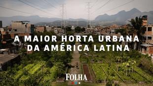 Manguinho's Urban Farm