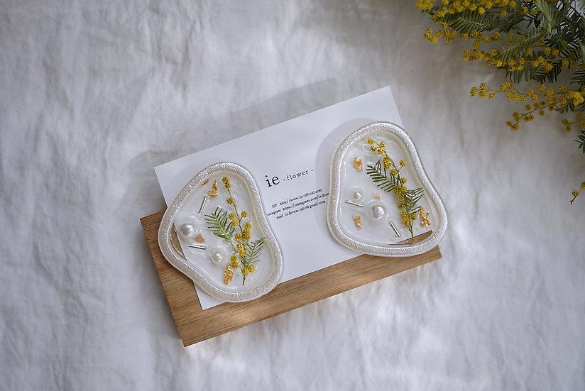mimosa  Pierce< Pearl >