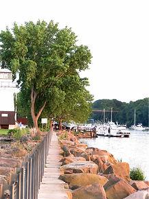 rocks and trees dock edited vector.jpg