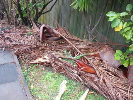Pesky palm tree leaves