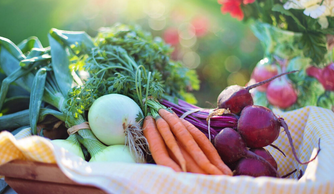 Top Three Reasons to Eat More Raw, Plant-Based Food