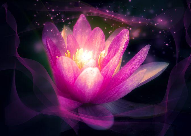 flower-3103636__480