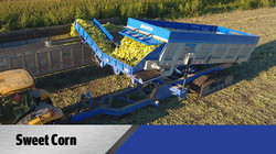 Sweet Corn With the Crop Cart
