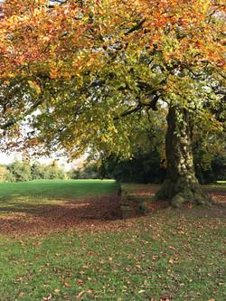 reynolds-park-autumn-1