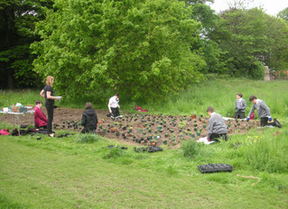 Repairs, planting and public support - a year in the life of Reynolds Park