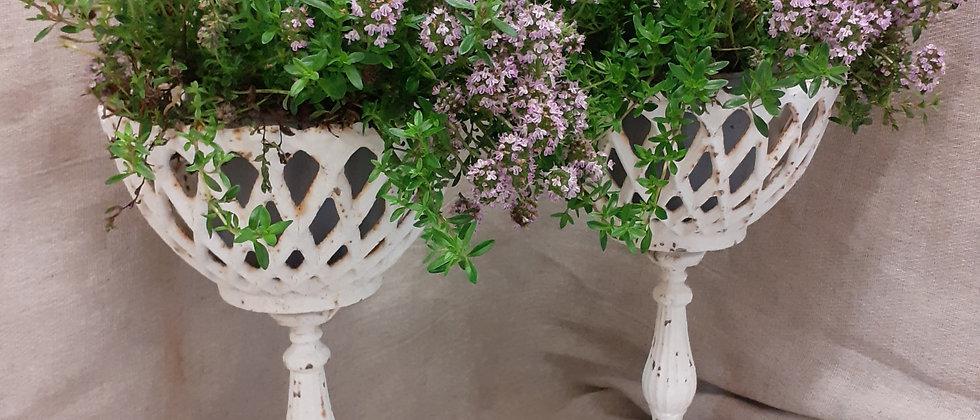 Pair cast iron planters