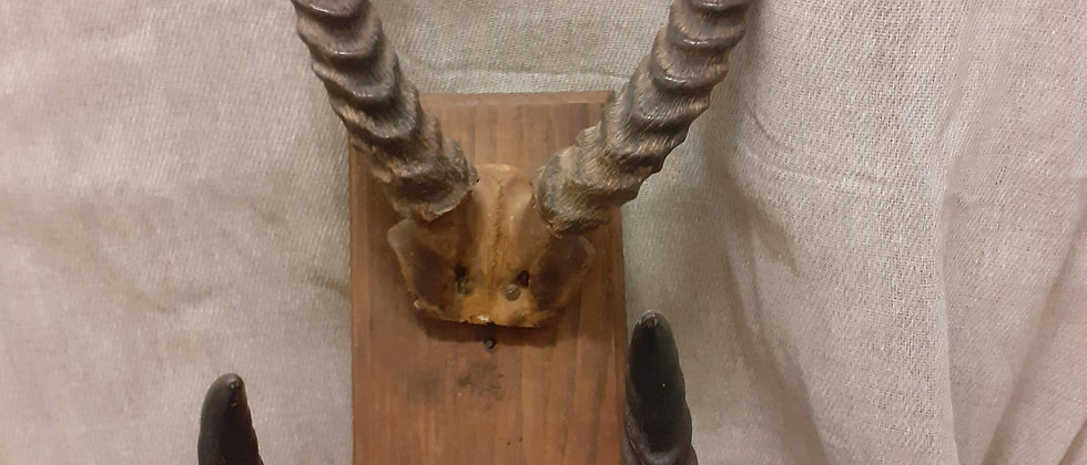 2 pairs of horns on a wooden mount