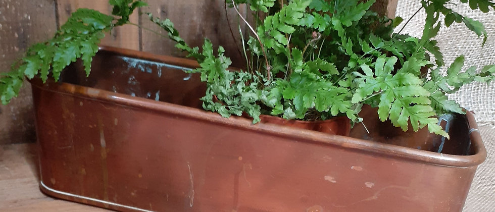 Copper planter
