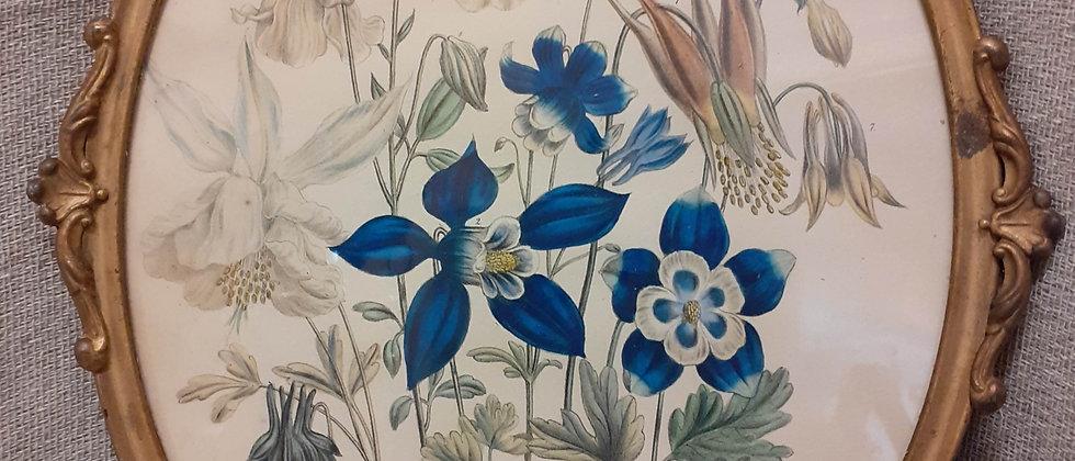 Victorian botanical print