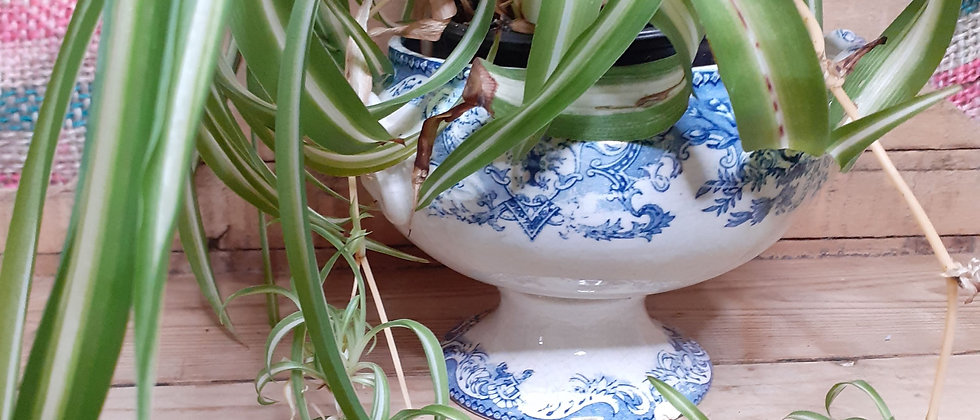 Victorian Blue and white lidded tureen