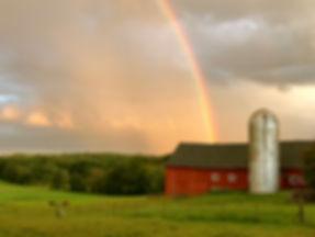 rainbow hill with horses.JPG