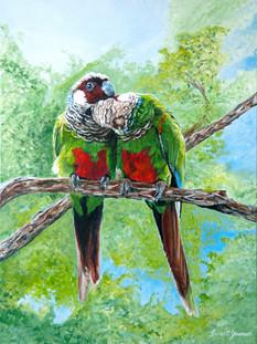 Grey-Breasted Parakeet