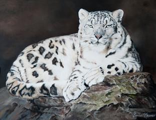Snow Leopard - Armoona
