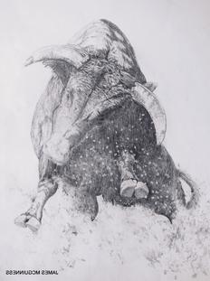 Bull Sketch (1)