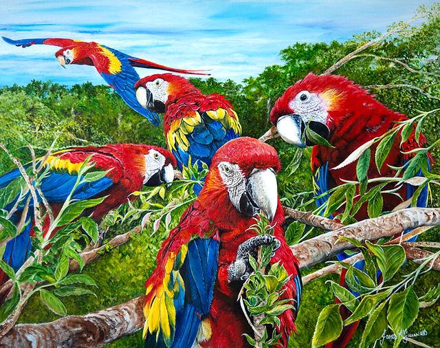 Scarlet Macaws.jpg