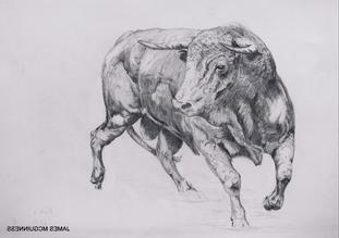 Bull Sketch (3)