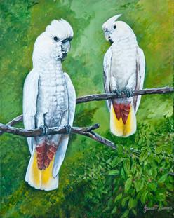 White Philippine Cockatoo
