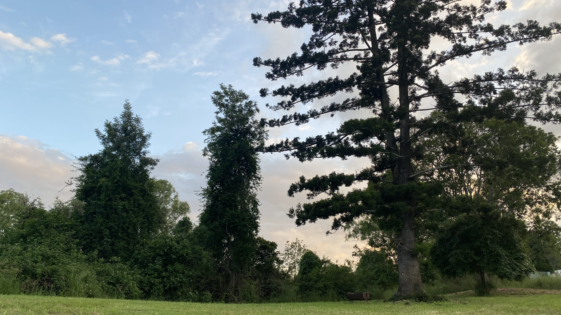 Pine Tree Hill Unpowered