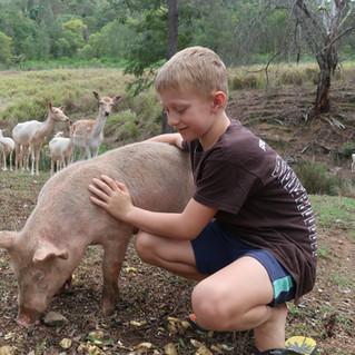 Daily Animal Feeding