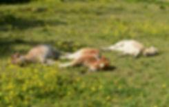 Foals 24May 2020a.jpg