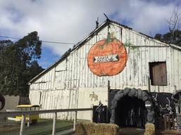 Arata's Farm, Half Moon Bay, California.