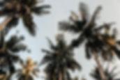 pexels-photo-804410.jpg