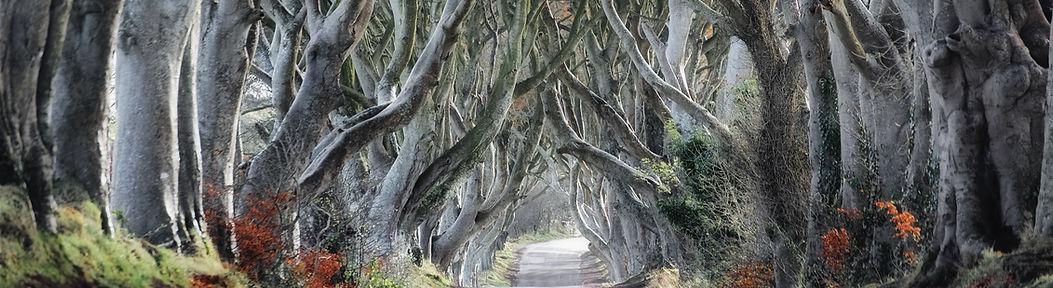 Kurvige Tree Road