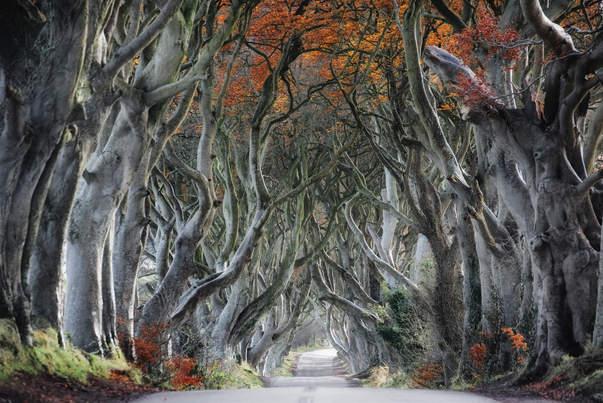 Curvy Tree Road
