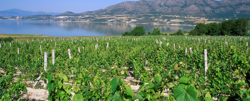 picture by wines of greece