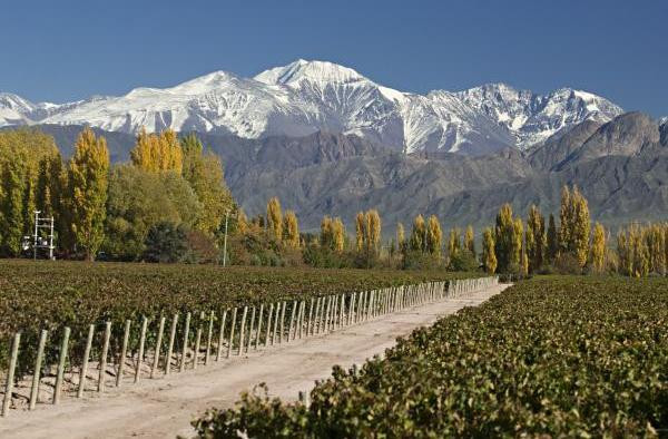 Mendoza by Wines of Argentina