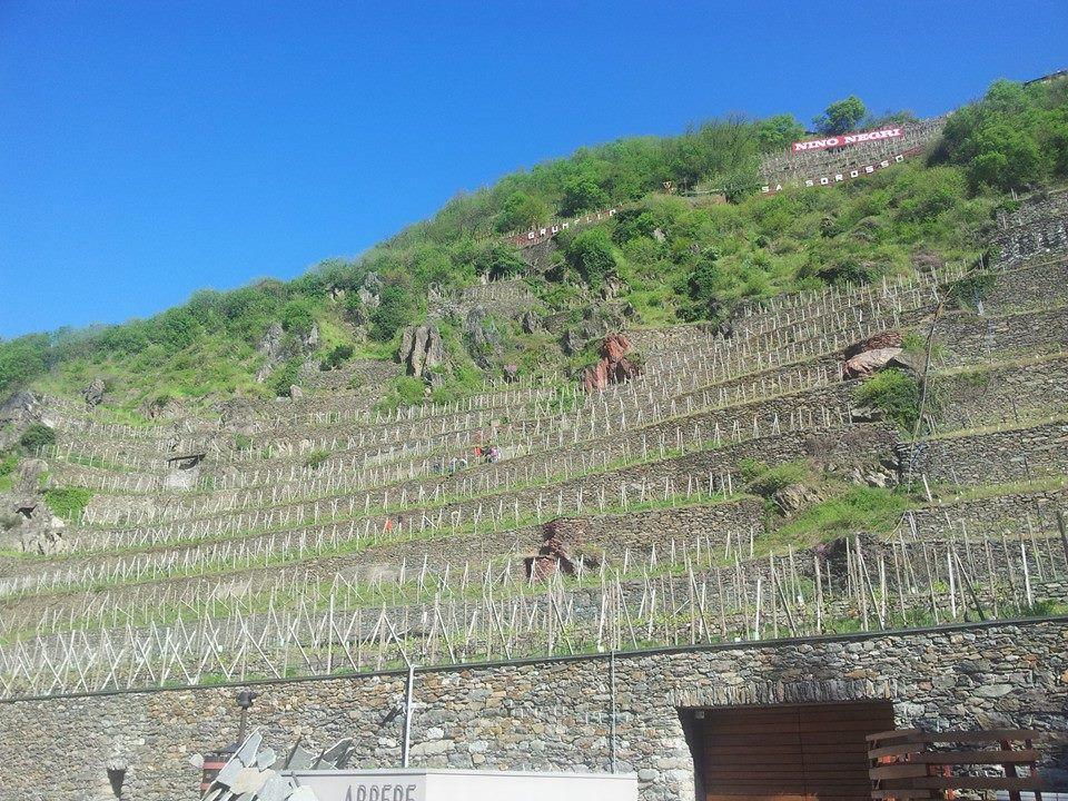 Valtellina - Arpepe and Nino Negri vines
