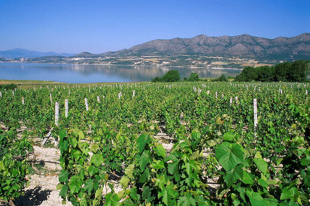 Greek vineyards by Wine & Food magazine