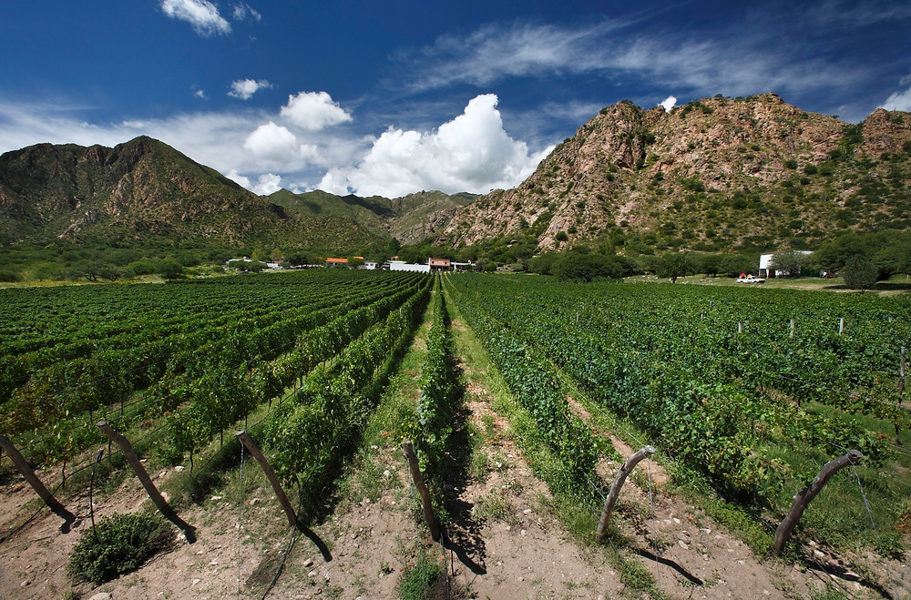 Cafayate by wines of Argentina