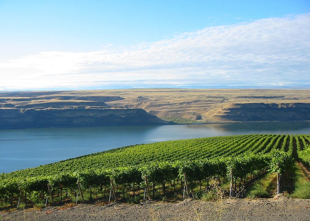 Washington state wineries by Wine Forays
