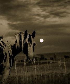 horse-1090674_1920.jpg