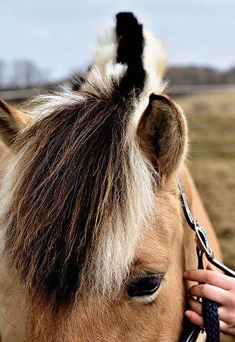 horse-4054849_1920.jpg