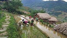 Harvesting-season-inside-eco-palms-house
