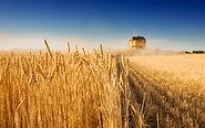 Средства защиты зерновых культур