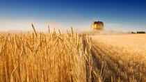 """Lazio, si """"semina"""" per il nuovo Piano di Sviluppo Rurale"""