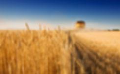 Пшеница, ячмень, просо, подсолнечник