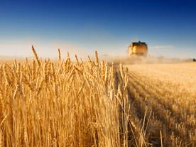 Central Alberta farmland average prices highest in Canada