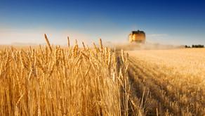 Are U.S. Farms Feeding the U.S.?
