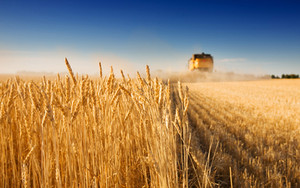 Harvest time, crazy time