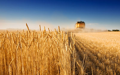 Harvesting. As you sow, so shall you reap