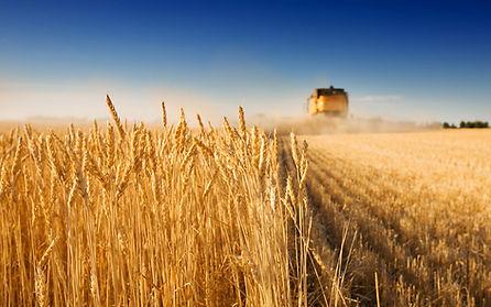 Landseehof Getreideernte
